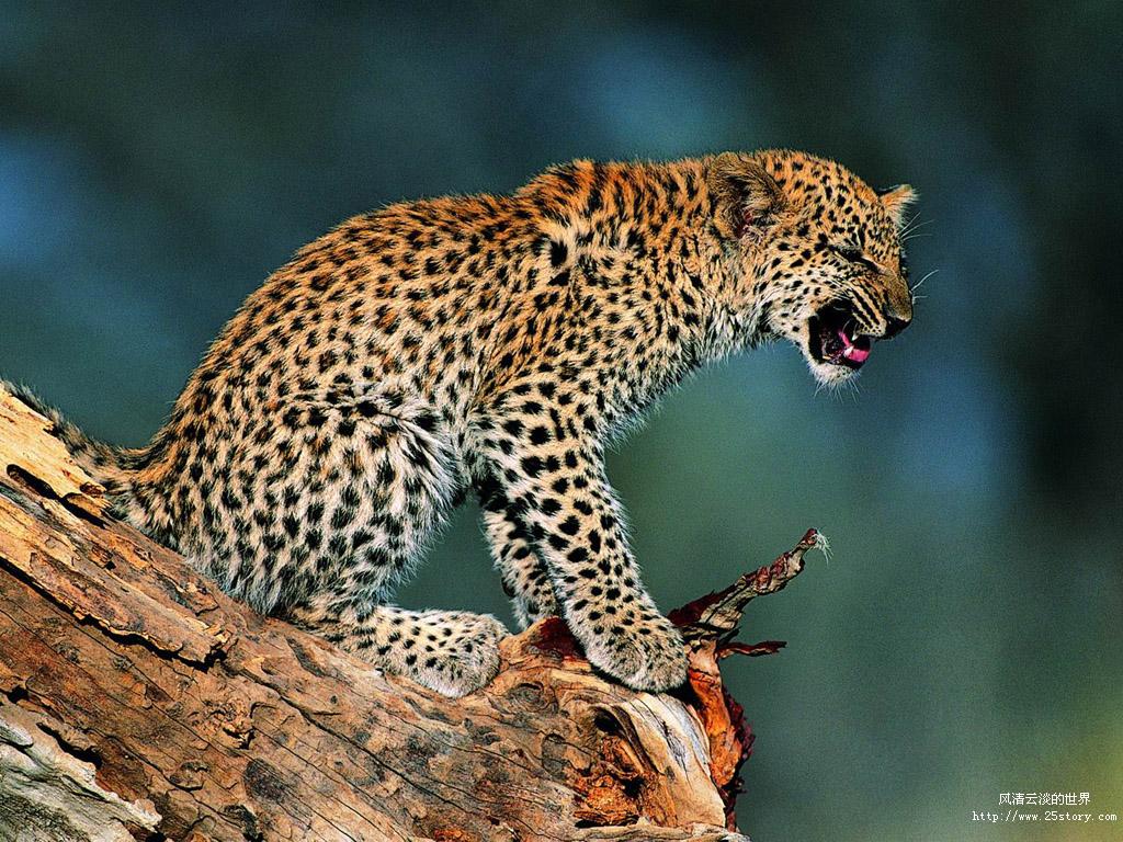 非洲动物王国手抄报